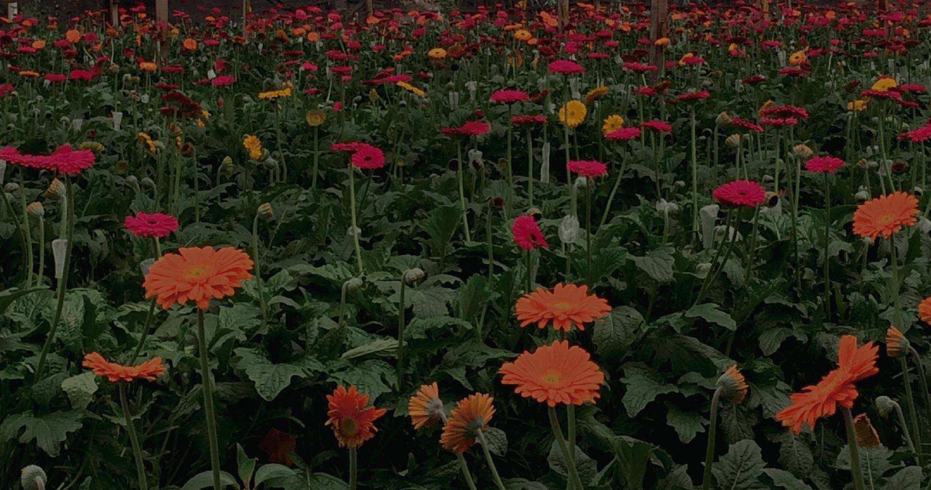 biohbac_banner_estimulacion-crecimiento-de-plantas